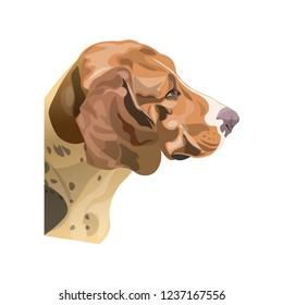 Portrait of scent hound dog. Vector illustration isolated on white background