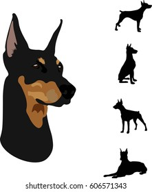 Portrait and silhouettes dog breed Doberman vector illustration