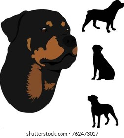 Portrait and silhouettes dog breed rottweiler vector illustration. Big dogs.