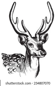 Portrait sketch of a Spotted Deer face. Vector illustration in black and white.