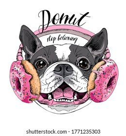 Portrait of the smiling funny Boston Terrier dog in the Headphones with pink Donuts. Humor card, t-shirt composition, hand drawn style print. Vector illustration.