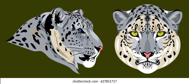 Portrait of the Snow Leopard in the facade and profile