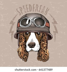 Portrait of a Spaniel dog in a retro biker Helmet. Vector illustration.