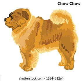 Portrait of standing in profile Chow Chow dog, vector colorful illustration isolated on white background