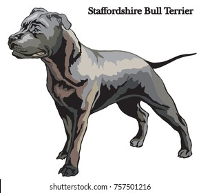 Portrait of standing in profile dog Staffordshire Bull Terrier vector colorful illustration isolated on white background
