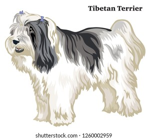 Portrait of standing in profile dog Tibetan Terrier, vector colorful illustration isolated on white background