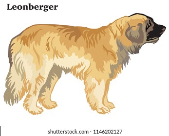 Portrait of standing in profile Leonberger dog, vector colorful illustration isolated on white background