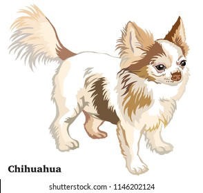 Portrait of standing in profile long-haired Chihuahua dog, vector colorful illustration isolated on white background