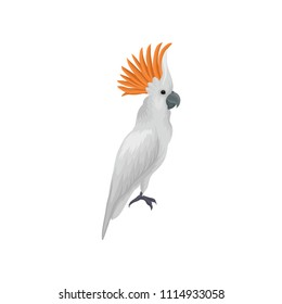 Portrait of sulphur-crested cockatoo. Large tropical parrot. Exotic bird. Flat vector element for educational book or advertising poster