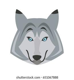 portrait of wolf. husky animal wildlife image