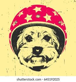 Portrait of Yorkshire Terrier with Helmet. Vector