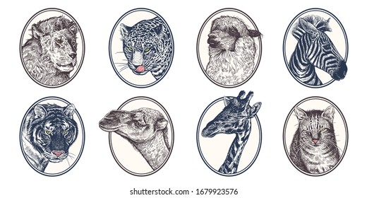 Portraits of animals in frame. Set of icons. African mammals zebra, giraffe, llama, camel, lion, tiger, leopard and cat close-up. Vector illustration, sketch. Hand drawing. Vintage.