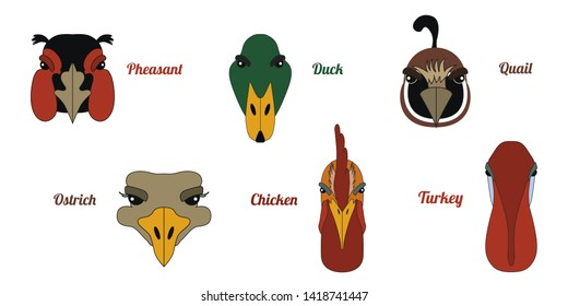 Portraits of a rooster, turkey, ostrich, duck, pheasant, quail head. Colorful illustration. Flat vector image of poultry farm as a design element for logo, icon, template, label.