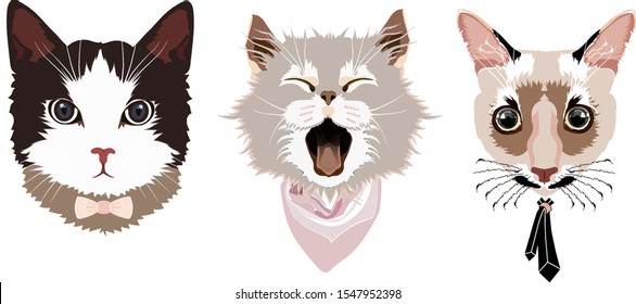 Portraits of three cats: a cat with a bow tie, a cat with a scarf, a cat with a tie, sketch vector graphic color illustration on white background