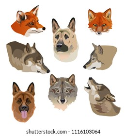 Portraits of wolves, foxes and dogs. Set of vector illustration on white background