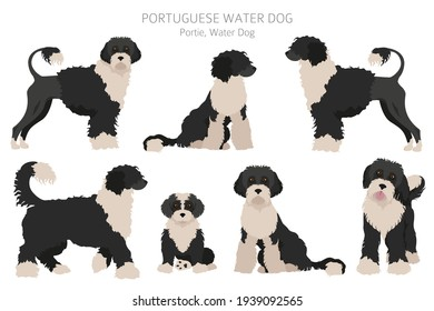 Portuguese water dog clipart. Different poses, coat colors set.  Vector illustration