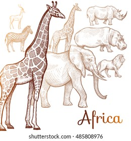 Poster African animals. Vector illustration for book covers, brochures, text, signage, visual aid for children. Drawing on white background. Elephant, lion, giraffe, rhino, hippo, zebra, antelope.