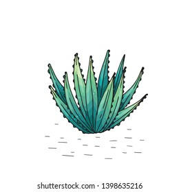 Poster with hand drawn succulents isolate on a white background. Vector icons in sketch style. Hand drawn objects