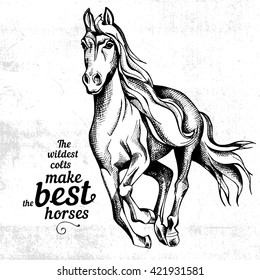 Poster with image of horse. Vector illustration.