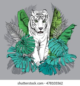 Poster with image of a white tiger walking in green banana leaves, fern, monstera on a gray background. Vector illustration.