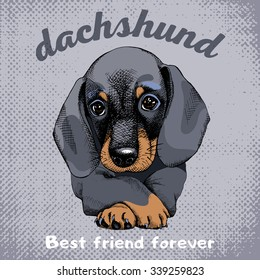 Poster with portrait of a dog Dachshund. Vector illustration.