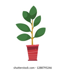 Pot with a house plant. Ficus tree in cartoon style.