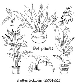 Pot plants set, vector illustration flowers in pots drawn black line on a white background, hand-drawn design elements.