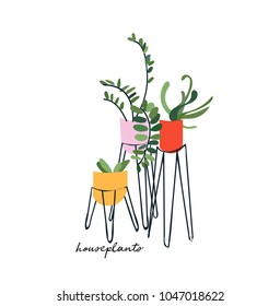 pot plants vector illustration. houseplants.