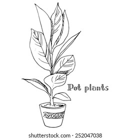 Pot plants, vector illustration potted plant drawn black line on a white background, hand-drawn design element.