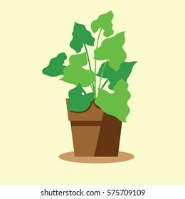 Houseplant's in pot with silhouette for indoor decoration.