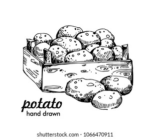 potato box hand drawn vector illustrations