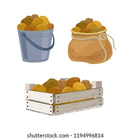 potato harvest in different containers. vector illustration