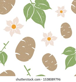 Potato seamless pattern. Potatoes, leaves and flowers on white background. Vector shabby hand drawn illustration