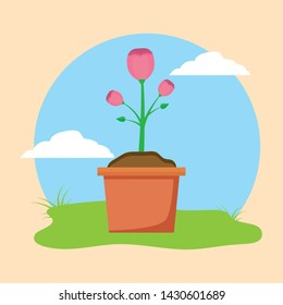 potted flower plants decoration gardening flat design vector illustration