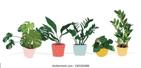 potted houseplants collection vector illustration.