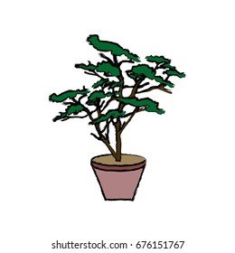 potted plant tree natural botanical