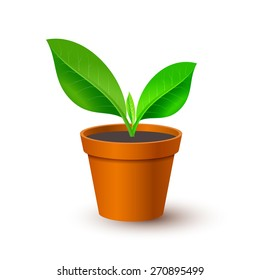 Potted plant. Vector illustration.