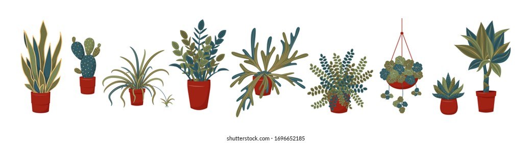 Potted plants collection. Interior plants. Urban jungle, trendy home or office decor with plants. Set of house indoor plant vector. Spider plant, dracaena, zz plant, succulents, cactus, fern, etc
