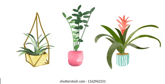 potted plants collection. succulents and house plants. hand drawn vector watercolor art.  Set of house indoor plant vector cartoon doodle.