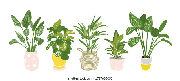 potted plants collection. succulents and house plants. hand drawn vector illustration. Set of house indoor plant vector cartoon doodle.