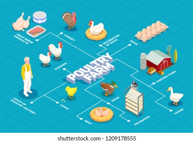 Poultry farm flowchart with chicken farm turkey goose birds eggs meat products isometric elements vector illustration