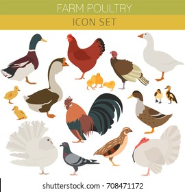 Poultry farming. Chicken, duck, goose, turkey, pigeon, quail icon set isolated on white. Flat design. Vector illustration
