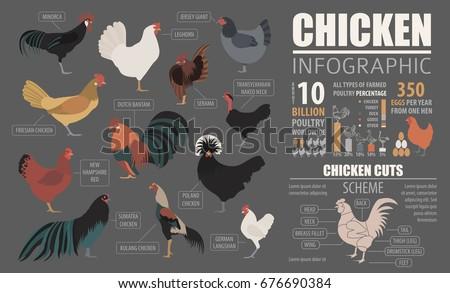 chicken template - Ataum berglauf-verband com