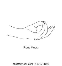 Pran Mudra / Gesture of Life. Vector.