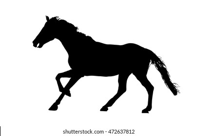 Prance horse black silhouette, vector illustration isolated on white background.