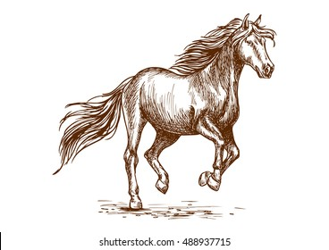Prancing horse portrait. Proud graceful mustang stallion freely running against wind with waving mane and long tail. Vector sketch