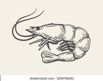 Prawn or Shrimp on white background. Vector