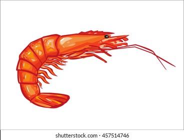 Prawn or Shrimp Side View Illustration Isolated on White Background. Editable Clip Art.