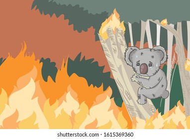 pray for Australia, koala crying on the tree in forest fire
