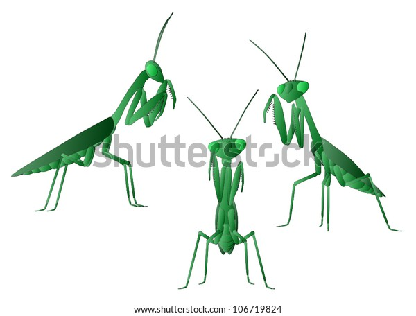 Praying Mantis (3 views)
